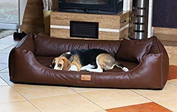Canape pour chien amazon